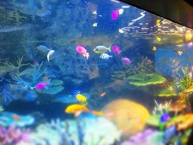 サンシャイン水族館.jpg